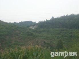 重庆市渝北区大湾镇杉树村100亩土地出租转让还剩40余年